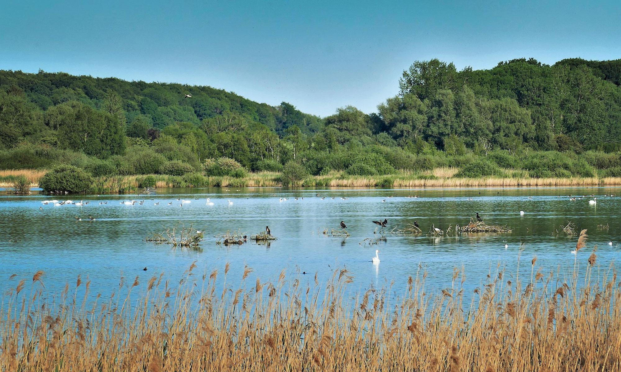 Naturschutzgebiet Dambecker Seen